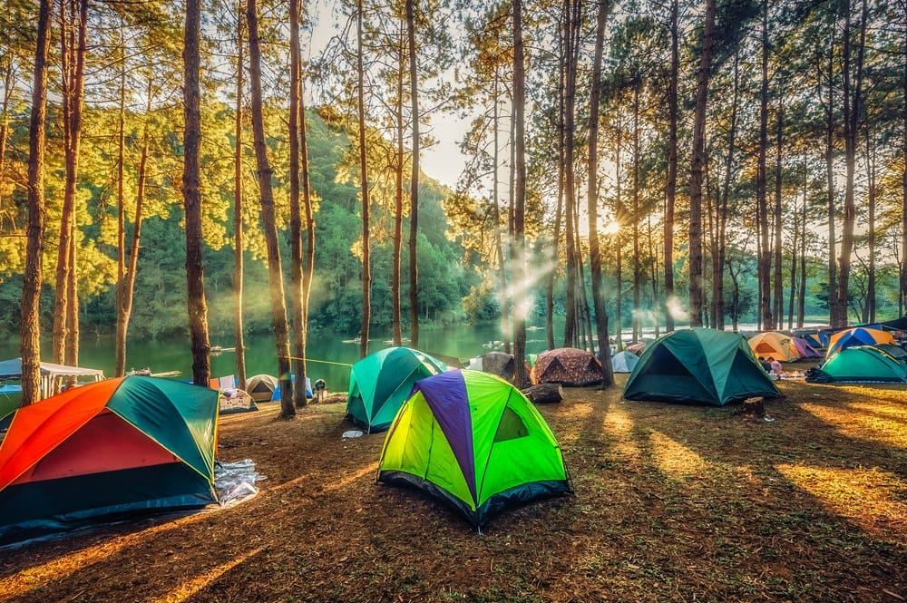 Camping tents under pine trees in campsite