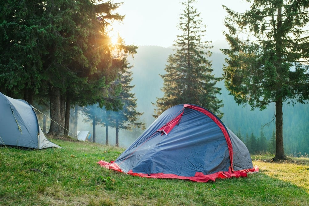 Tents beside pine trees