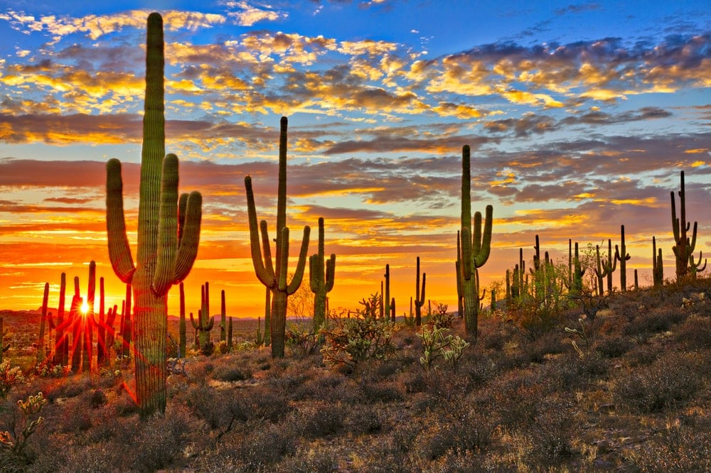 Beautiful sunset sight of Sonoran Desert