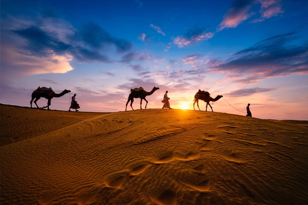 Walking people with their camels in sunset