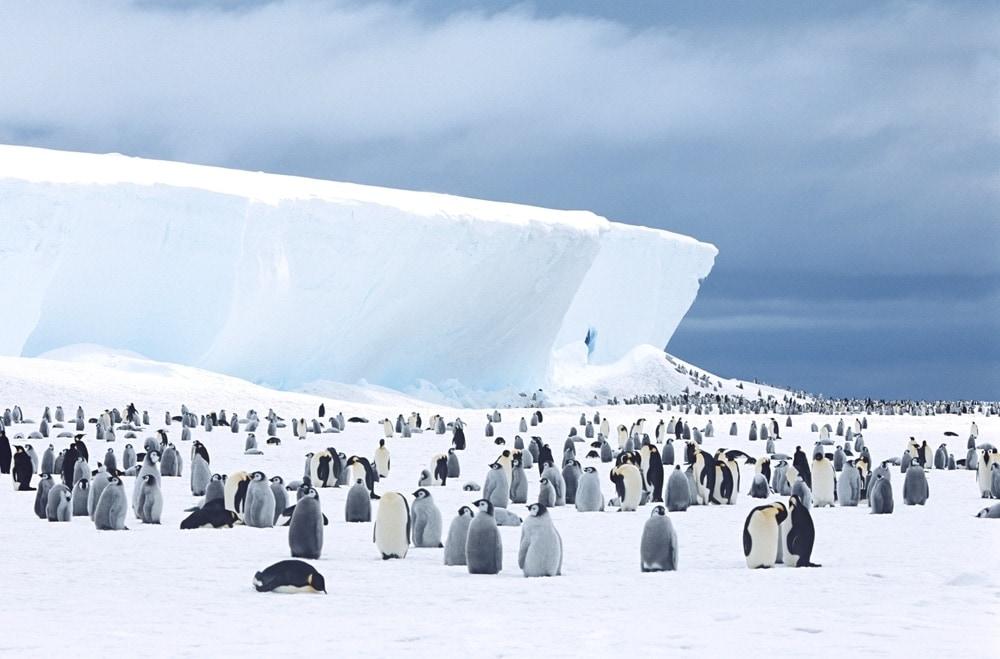 Penguin sight in Antarctica