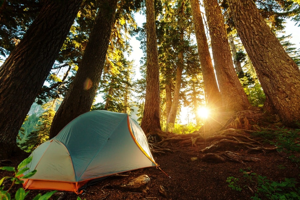 Camping tent under big trees