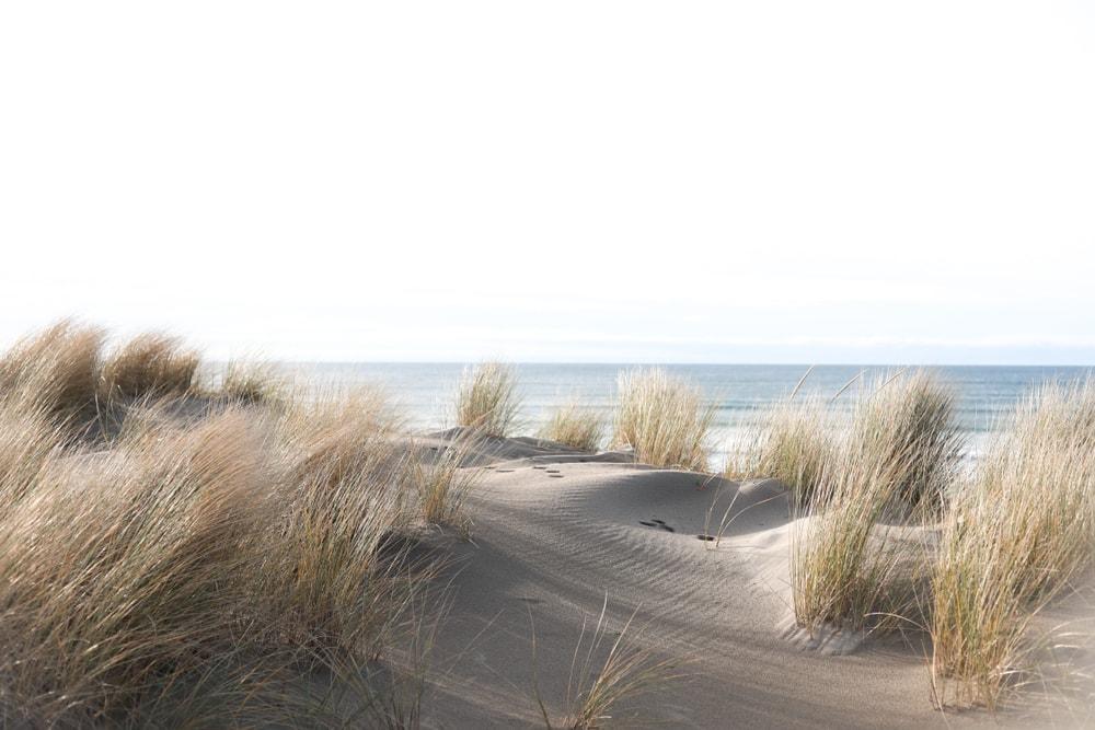 Fine beach sands