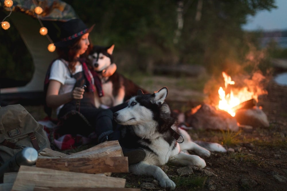 Woman chilling with her dogs while camping