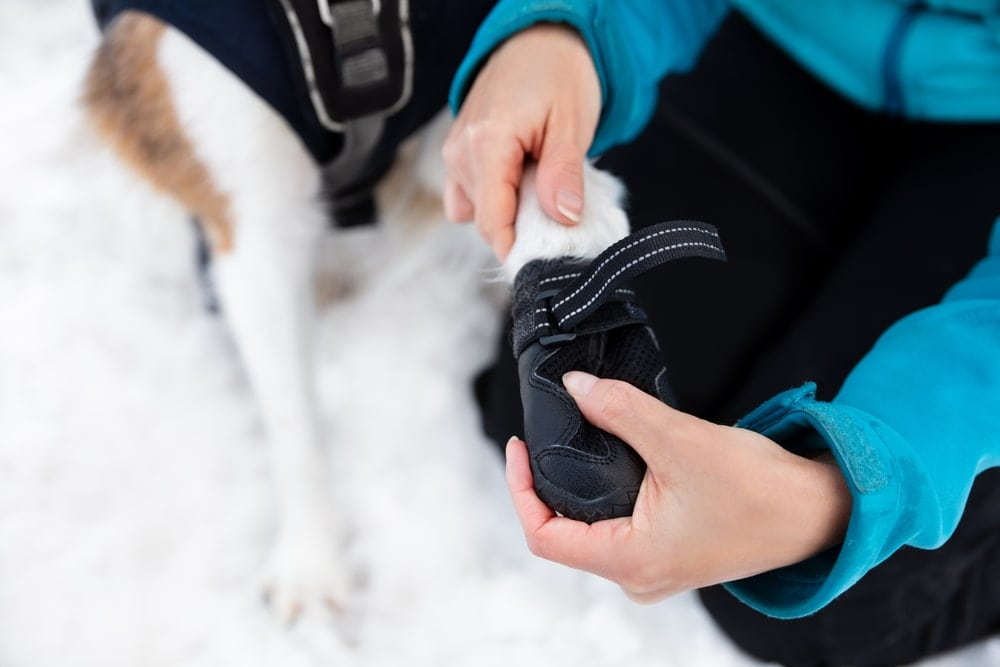 Camper putting a boot to her dog's foot while camping in the snow