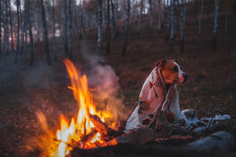 Dog covered up with a blanket while camping