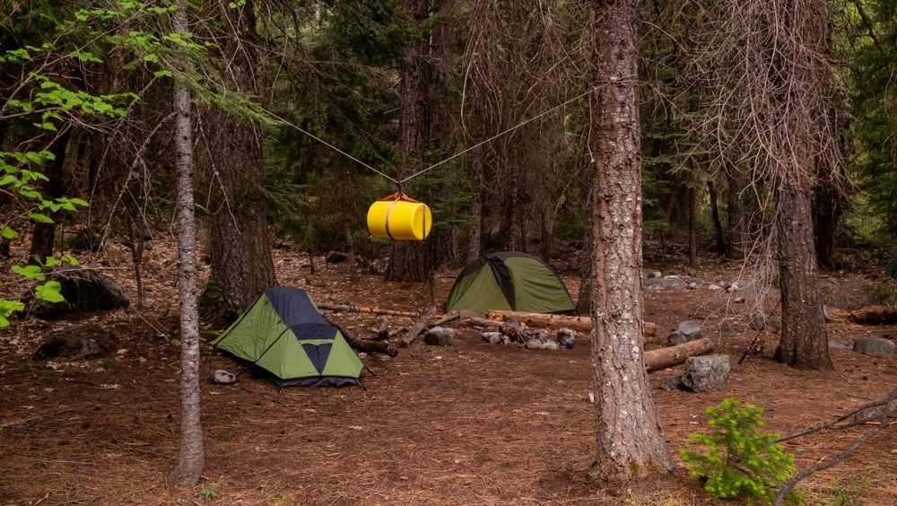 Bear hang kit between trees
