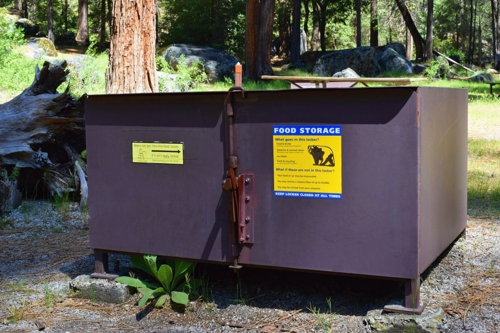 Bear box in the campground to keep bears and raccoons away from the campsite