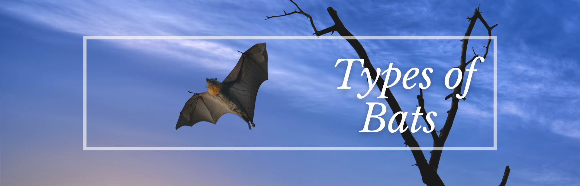 28 Types of Bats: The Cutest Bat Species (Names, Photos, and More)