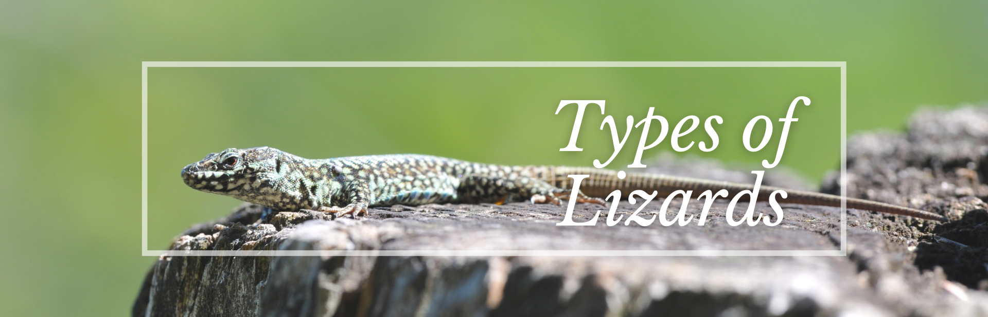 The 25 Most Amazing Types of Lizards (Names, Photos and More)