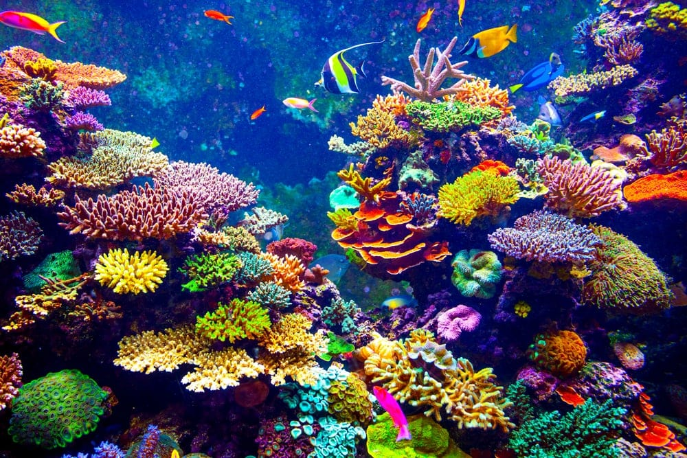 Colorful coral and and tropical fish