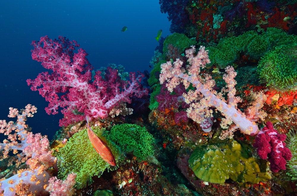 Colorful soft corals colony