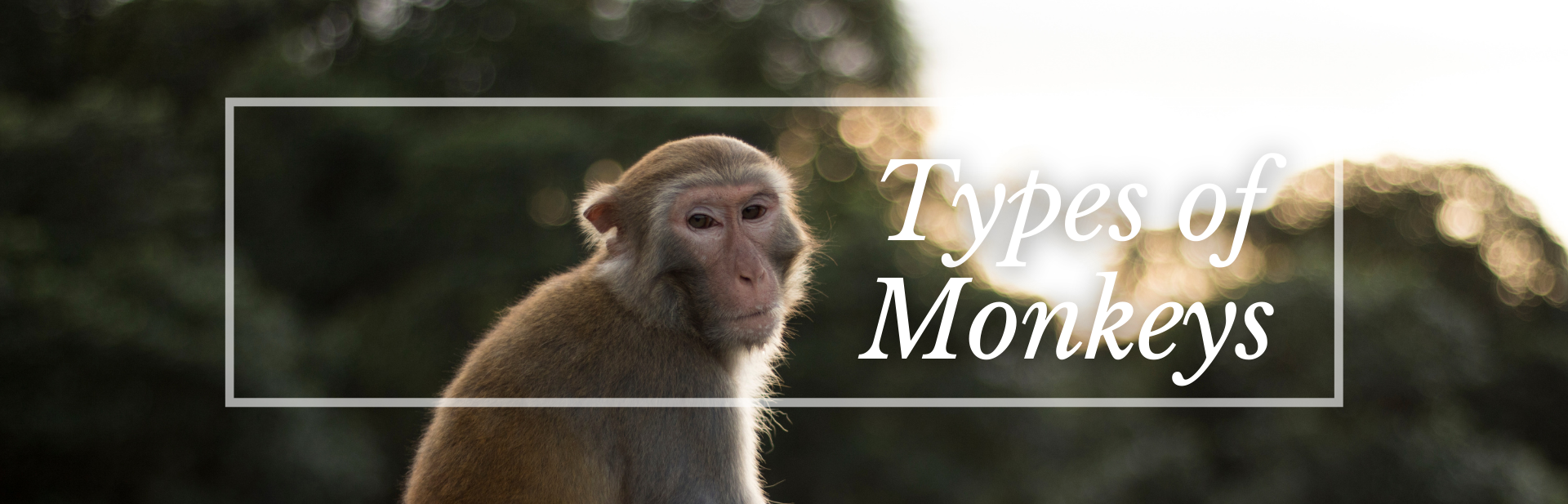 25 Remarkable Types of Monkeys (Names, Photos and More)