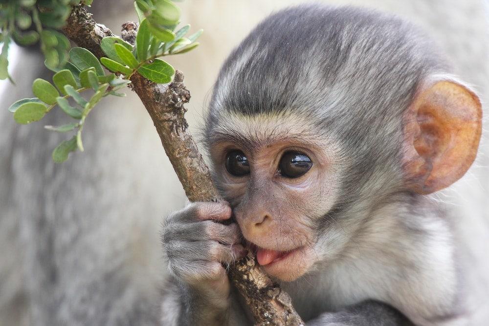 monkey holding a branch