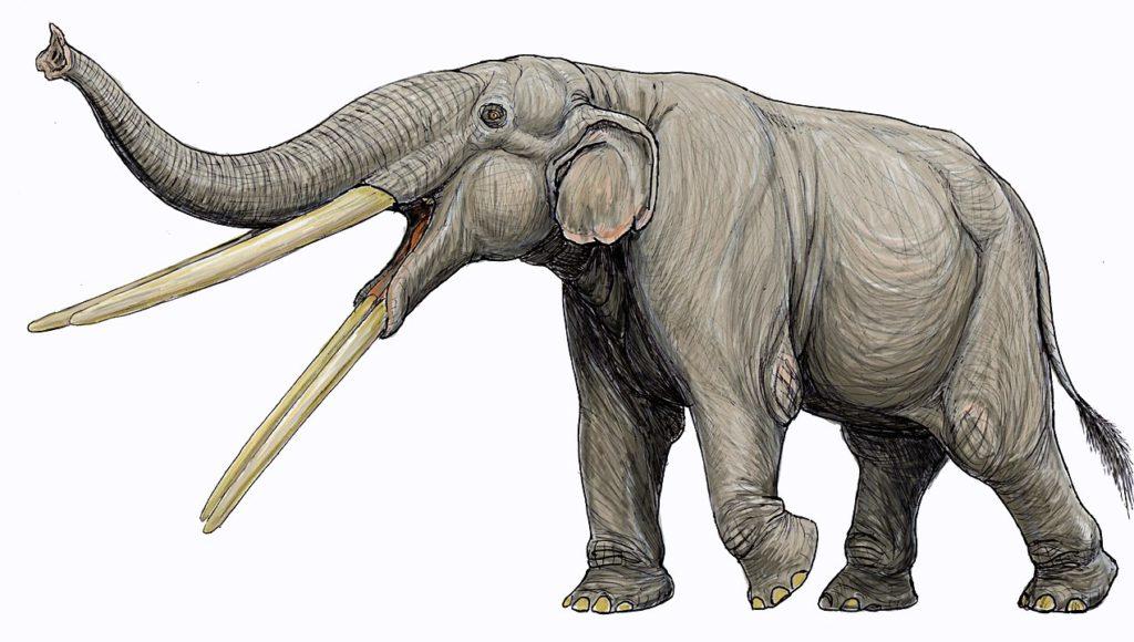 Drawing of an extinct elephant belonging to genus Stegotetrabelodon