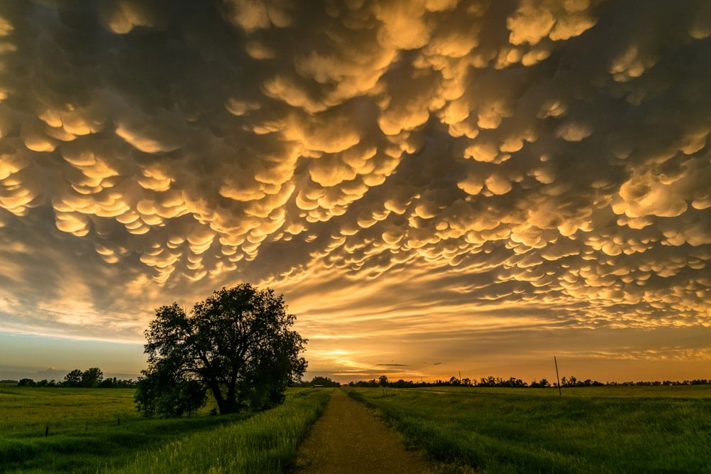 Mammatus clouds at the back of a thunderstorm over Sunset