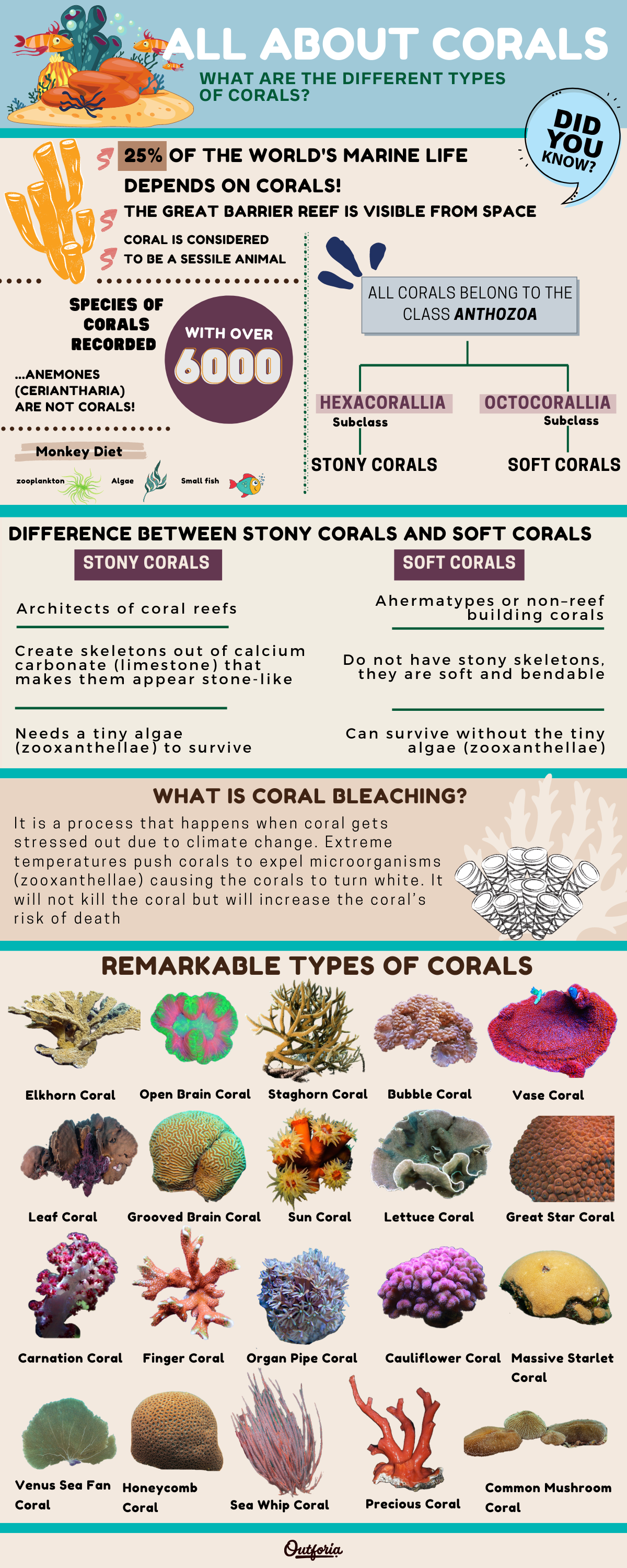 Types of coral infographic