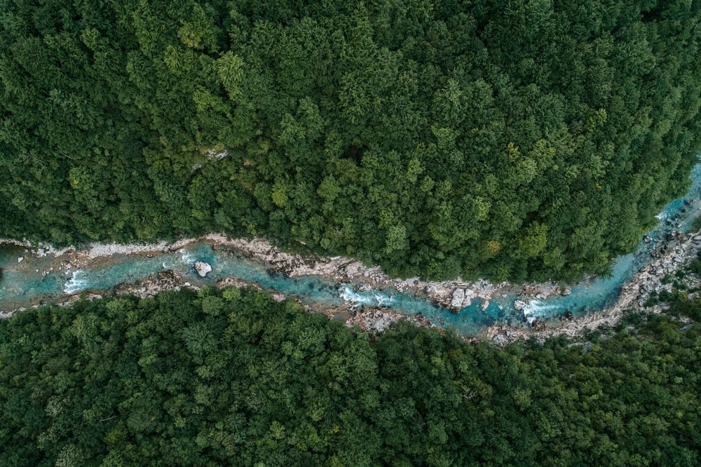 Aerial view of a river flowing in the forest