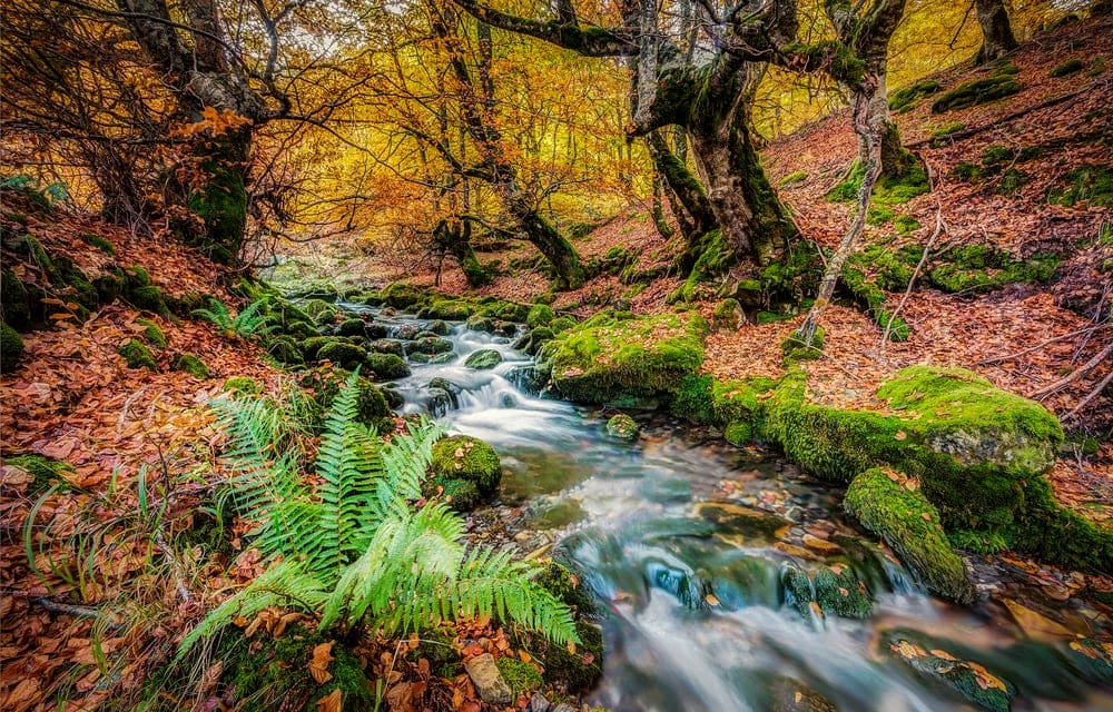 Stream in the middle of forest in Autumn Season