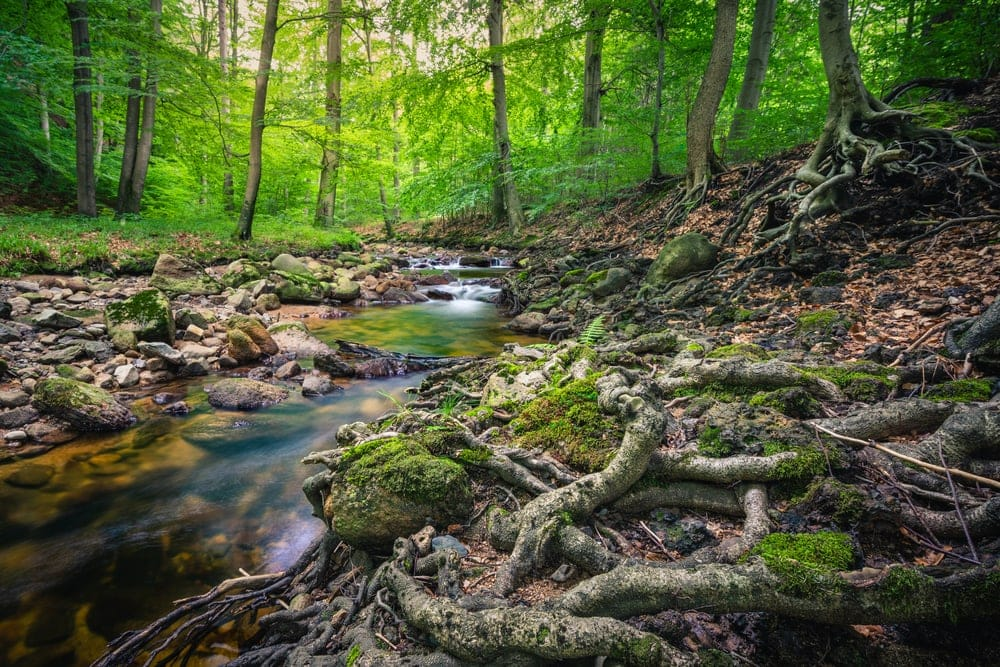 A brook in the forest of the Harz in Germany