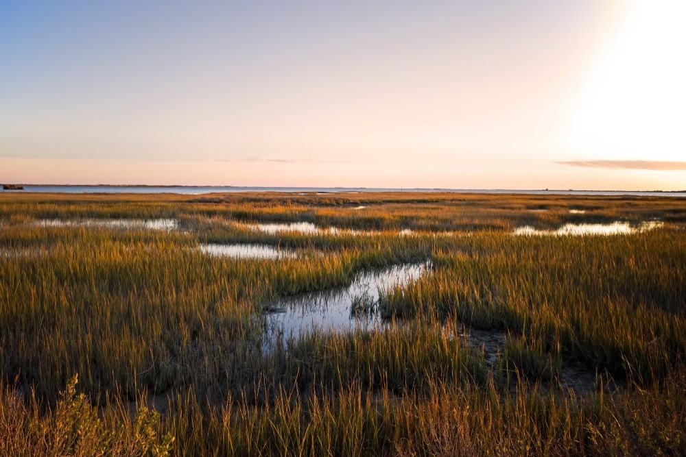 Saltmarsh on the Virginia coast in USA