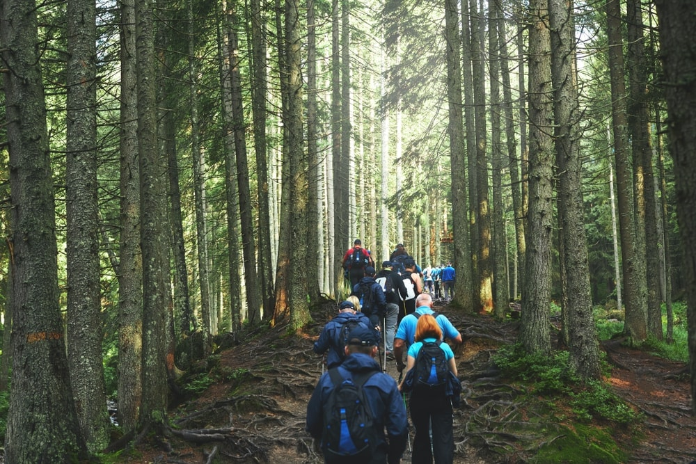 Big group of hikers on a forest trail