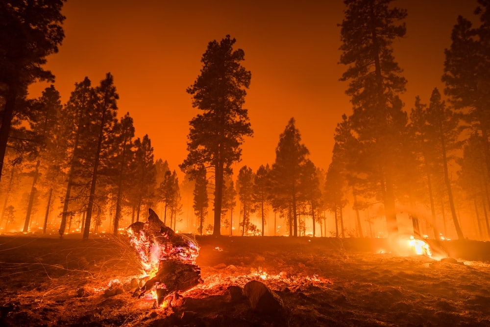 Orange sky cand pine trees burning caused by wildfires