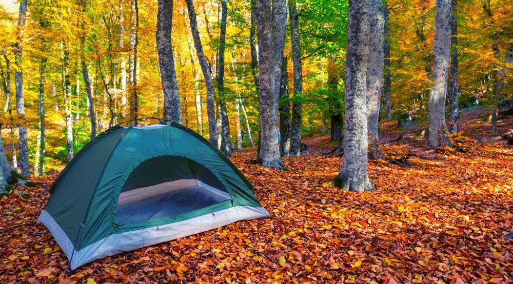 Tent on autumn leaves