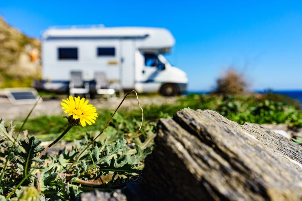 Sunflower with a camper in the background for spring camping