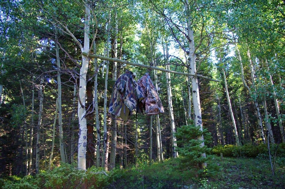 Bear bag hanging in trees