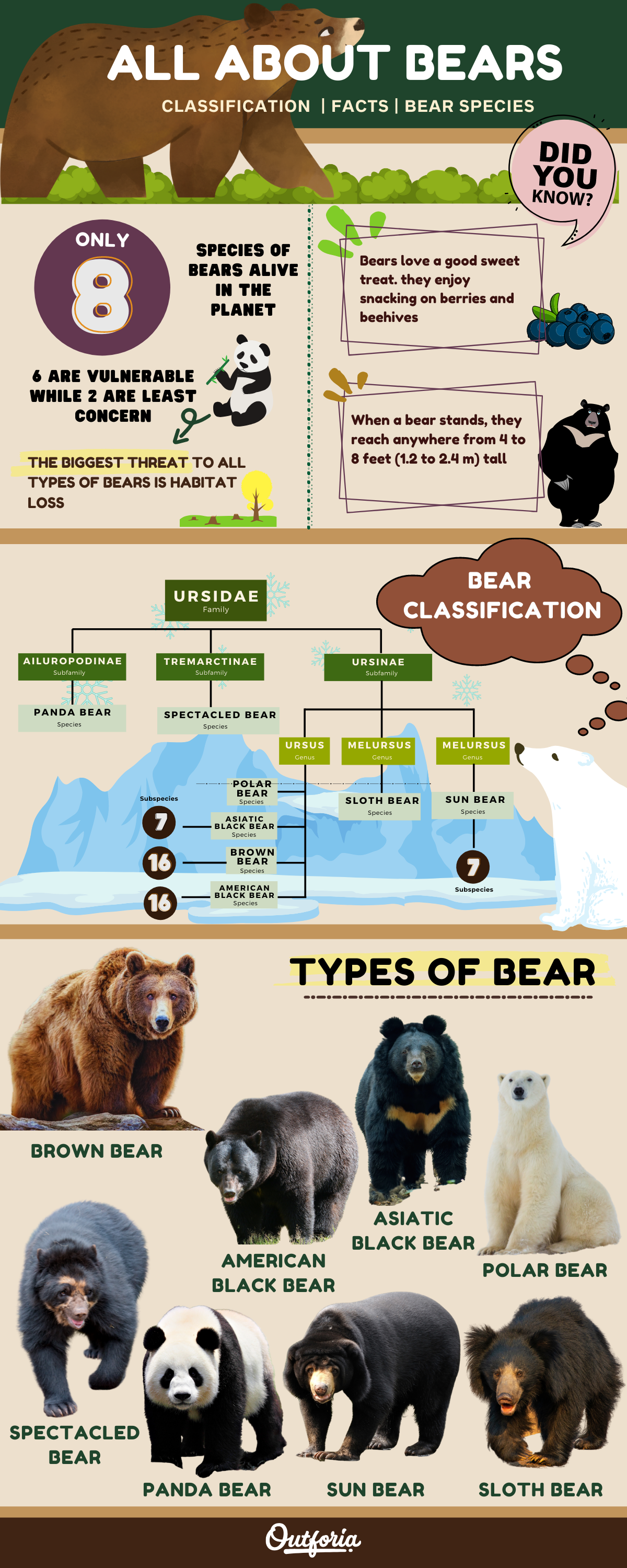 infographic about types of bears