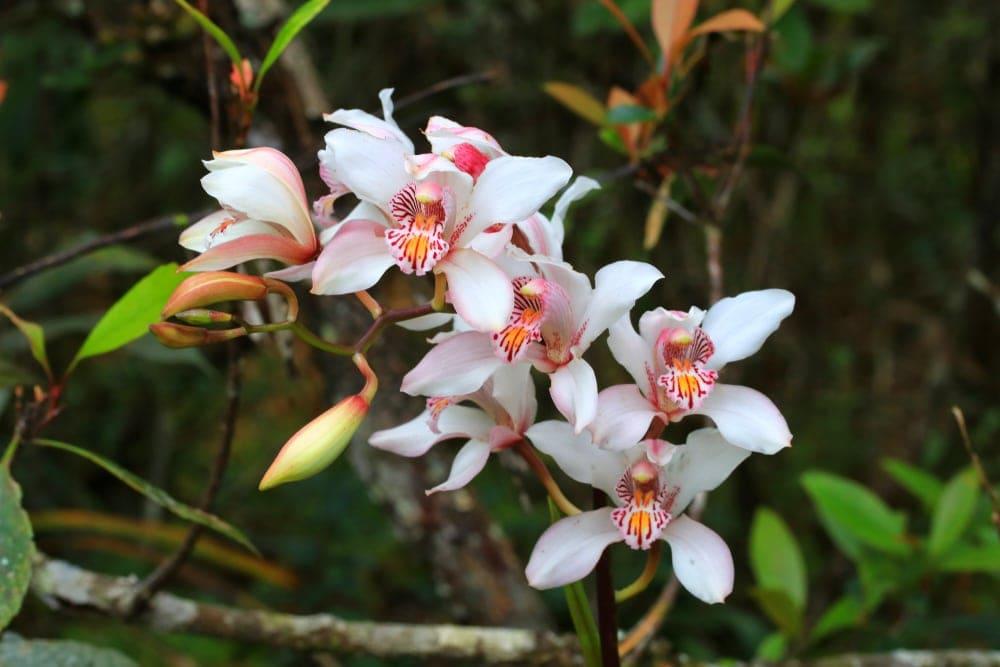 Order Monocots - Orchids