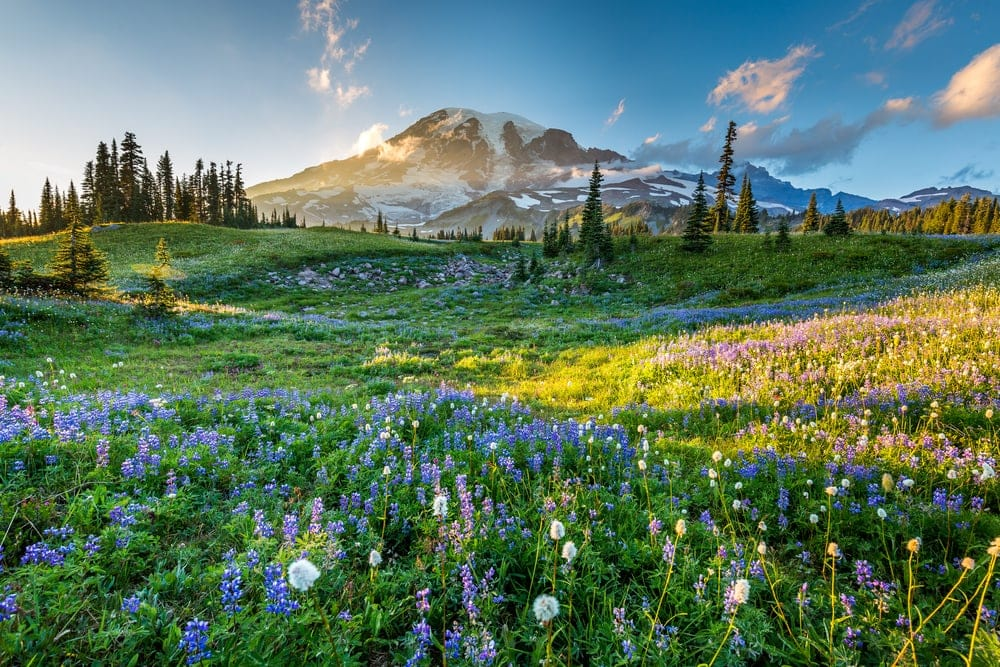 Different types of flowers and types of plants in a National Park