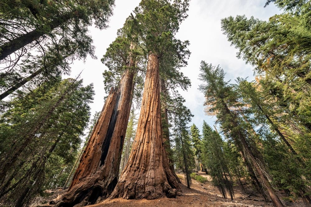 Tall redwood trees in Sequoia Park