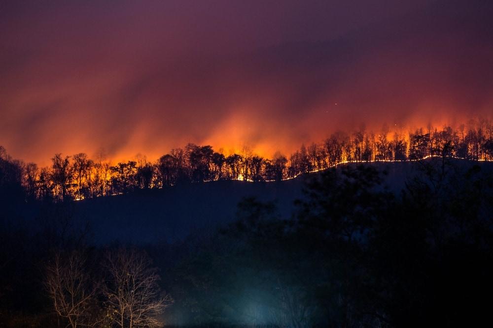 Trees burning during the night