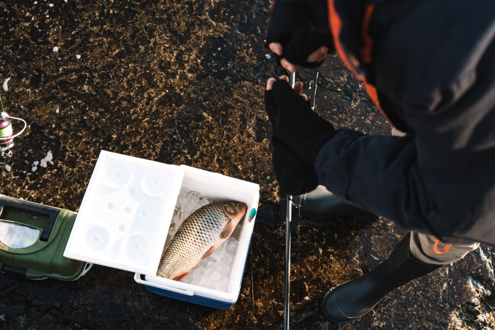 Man putting caught fish in a cooler with dry ice