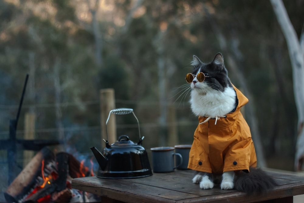 Cat camping wearing a yellow jacket and sunglasses sitting on a table
