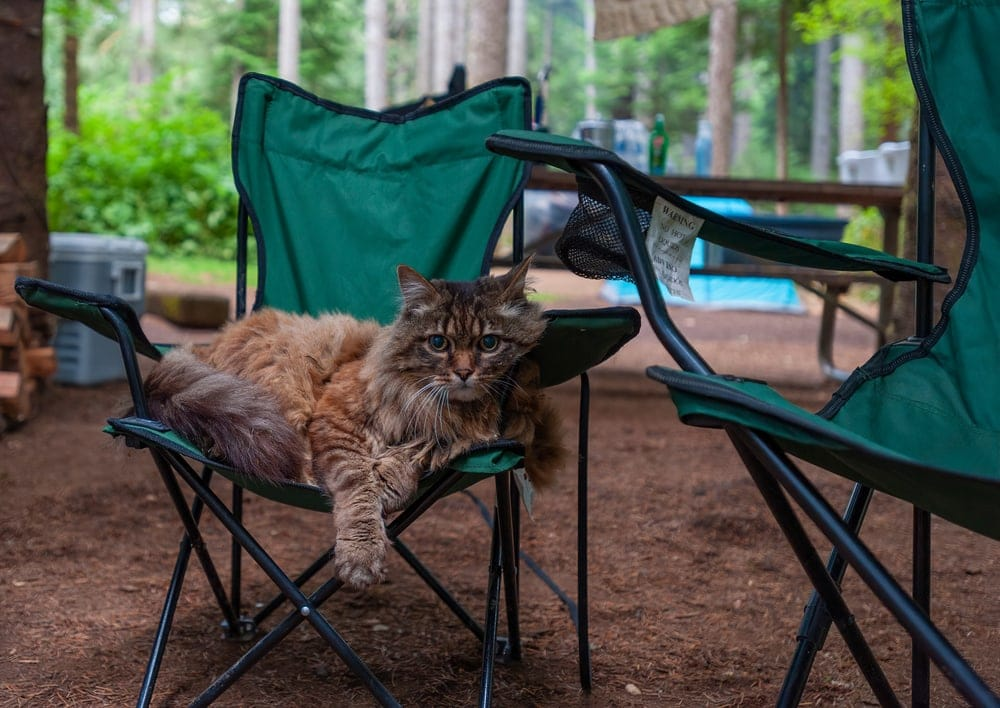 Camping with a cat sitting on a camping chair
