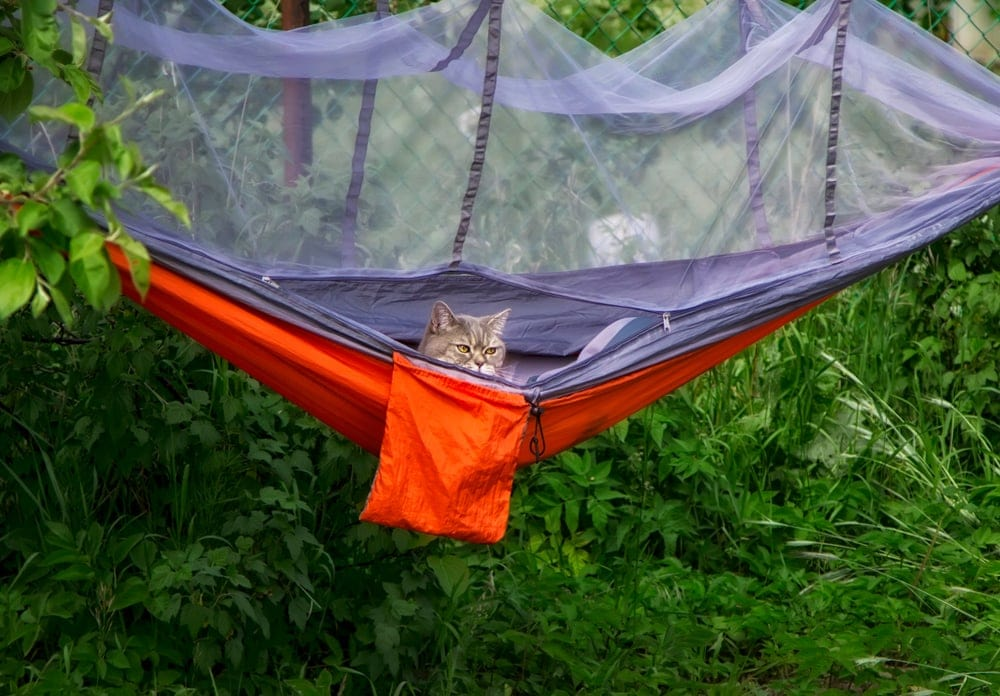Cat inside a camping tent