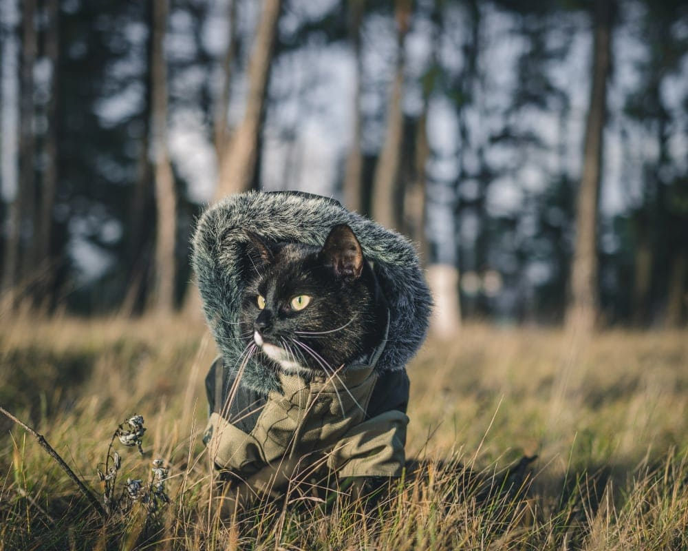 Camping with a cat who wears a little parka and his own clothes