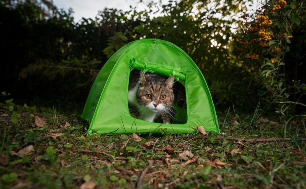 Cat inside a small pet camping tent