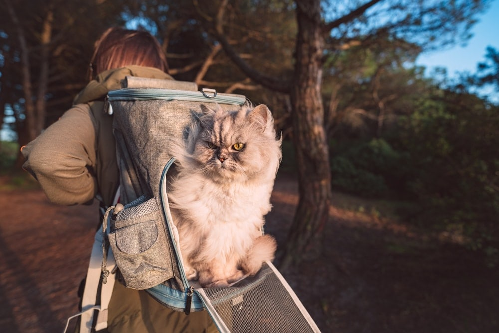 Woman wearing a cat backpack