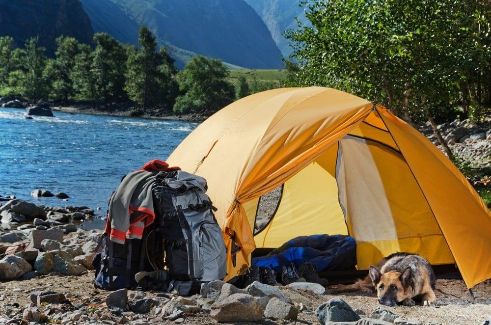 Dog under a camping tent vestibule resting
