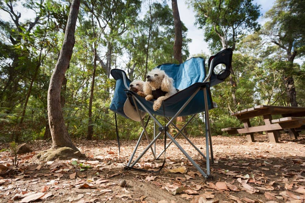 Two dogs sitting on a camping chair in a park