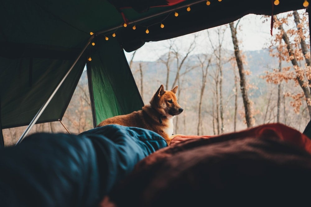 A dog inside a cozy tent with