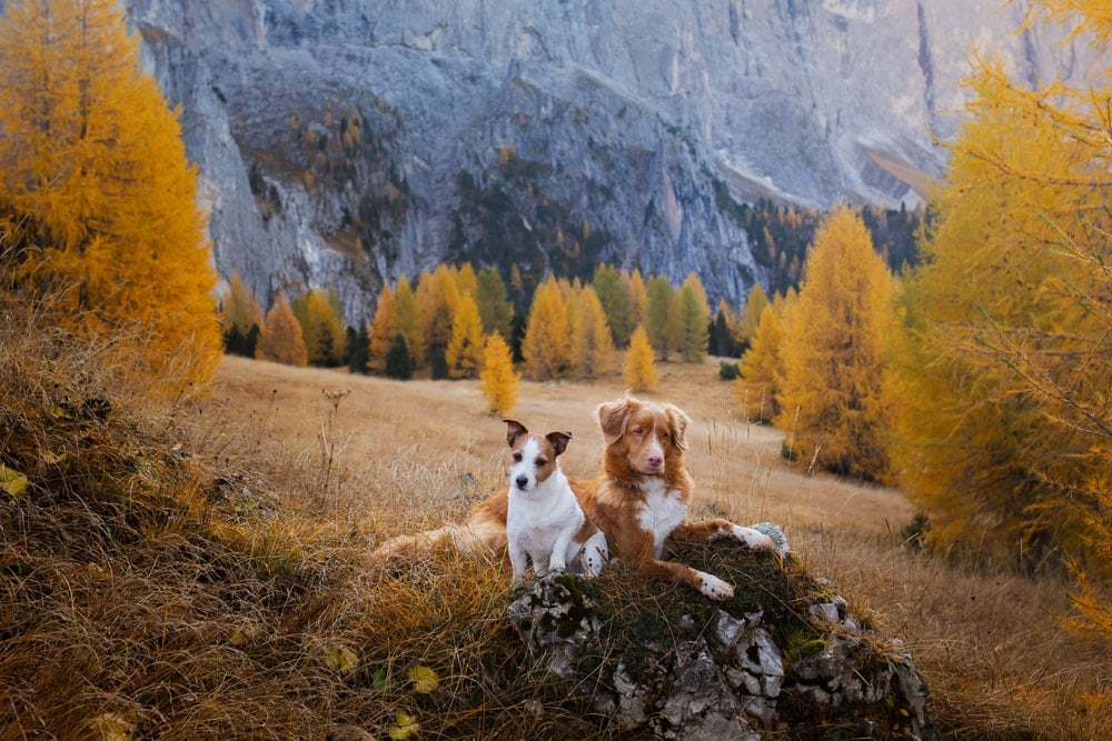 Two dogs on a rock surrounded by yellow trees in a camping park