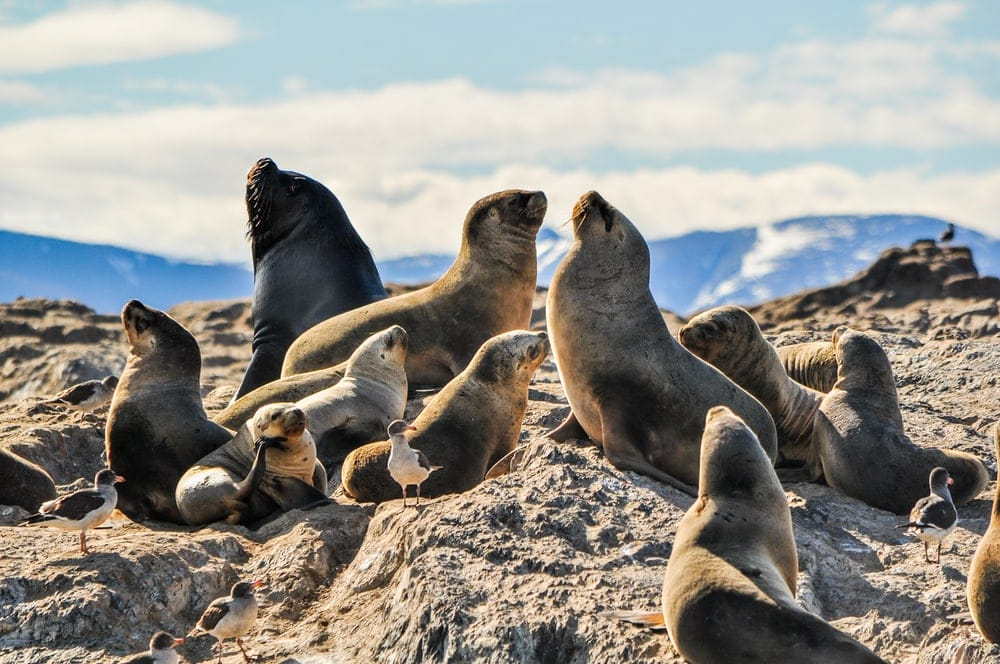 groups of seals resting on rocks