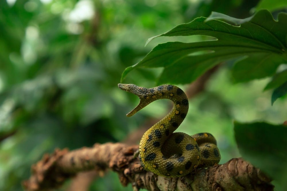 Green snake with open mouth on a branch