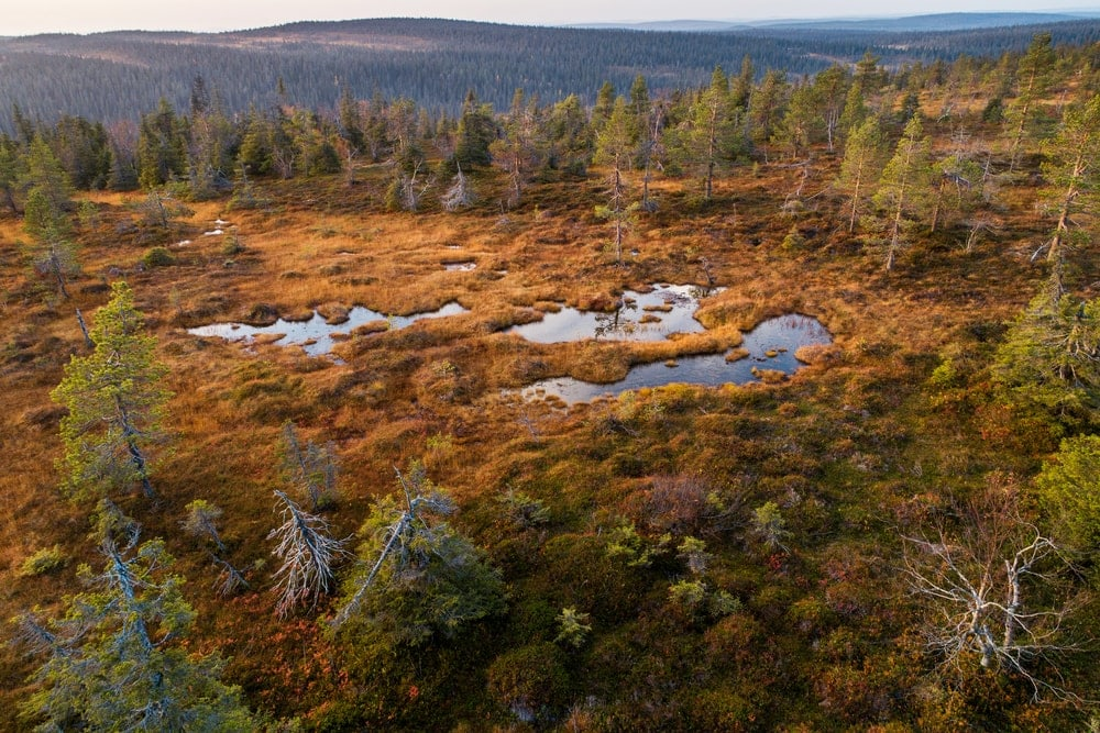 Boreal Forests and Taiga