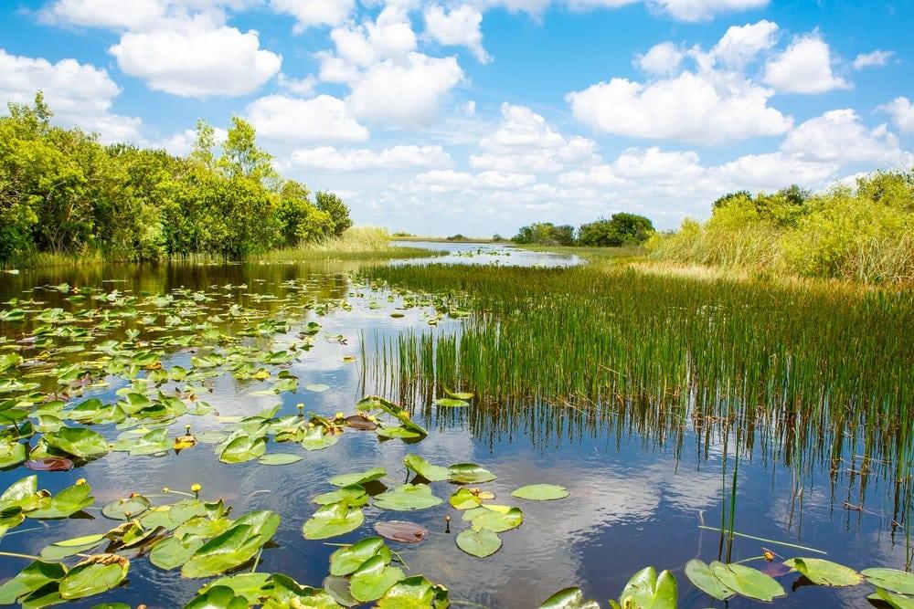 Flooded Grasslands and Savannas